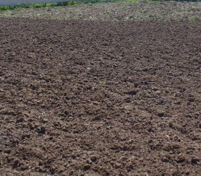 Фото газонного грунта